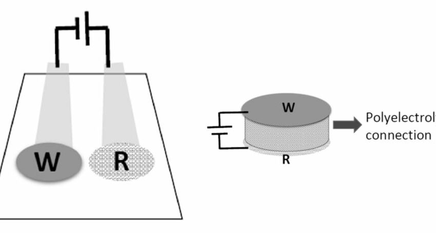 New Potentiometric Biosensor